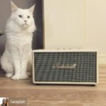 Marshall Stanmore Recensione